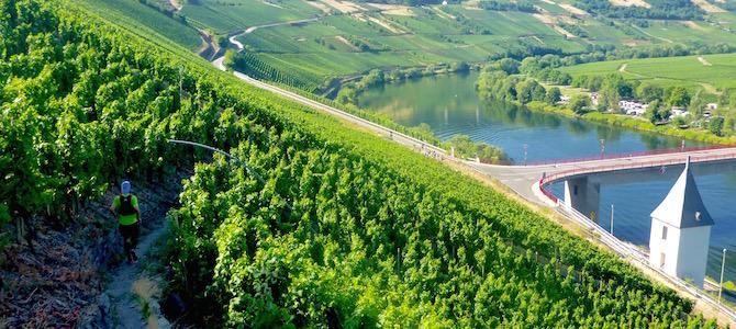 Trail Römische Weinstrasse – ein traumhafter Lauf in Leiwen an der Mosel