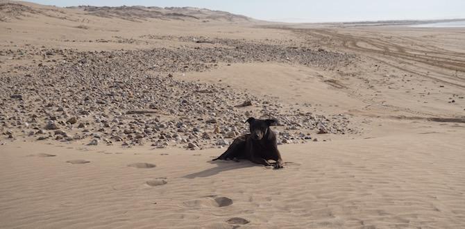 Sandy liegt am Strand