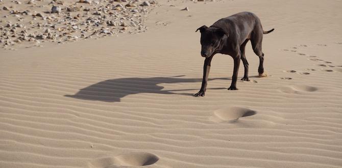 Sandy jagd Jogger am Strand Essaouira