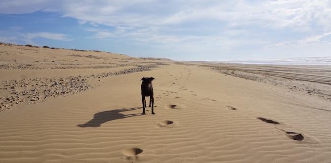 Die Jagd ist vorbei Sandy