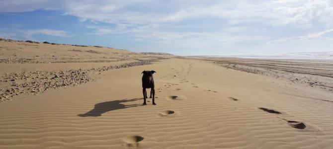 Sandy – Ein ganz besonderer Lauf