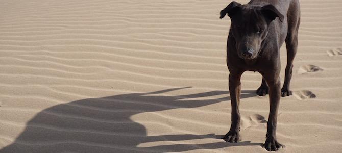 Strand von Essaouira Sand der Hund