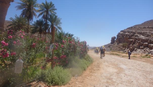 Oase mit Palmen - Die lange Etappe beim Marathon des Sables